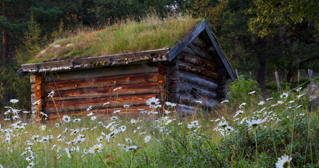The sun-weathered buildings are still surrounded by flowering meadows. Photo: Naturcentrum AB.